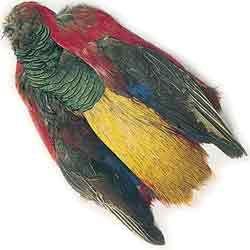 Veniard Golden Pheasant Body Skin