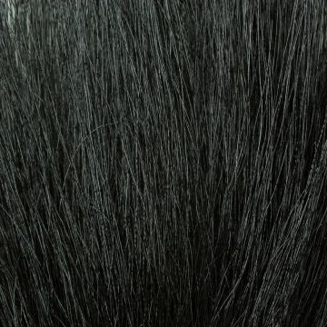 KFS Colobus Ape - Black Underwing