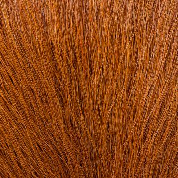 KFS Colobus Ape - Fiery Brown